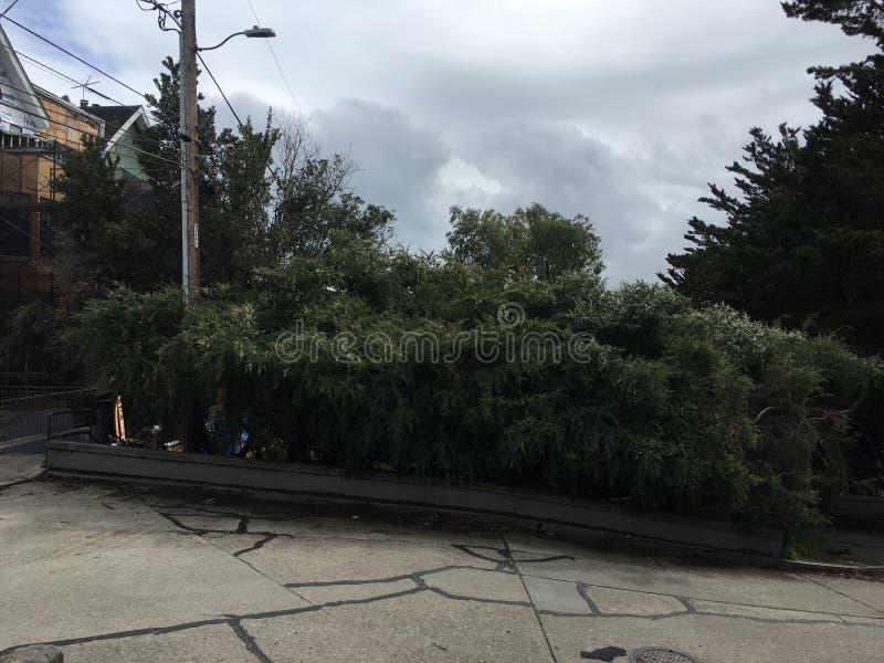 Истинная crookedest улица, улица Вермонта, Сан-Франциско, 1 стоковое фото