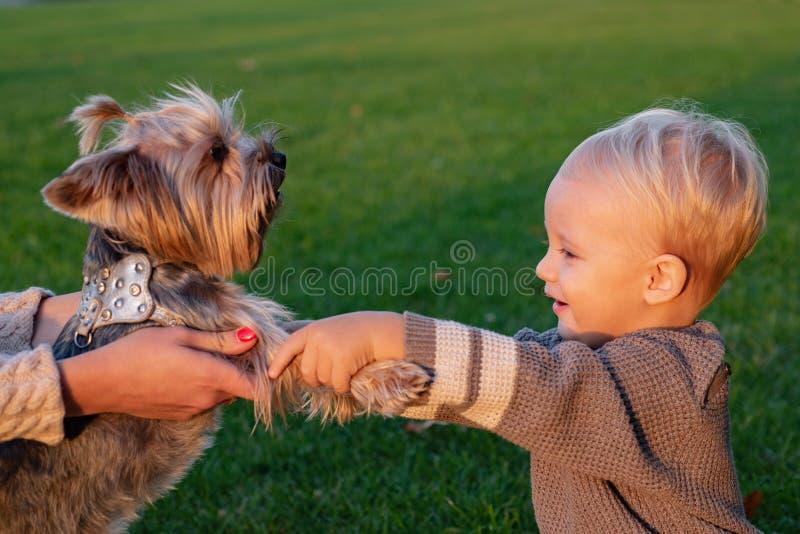 Истинное приятельство Лучшие други навсегда r Сладкие памяти детства Детская игра с собакой йоркширского терьера стоковая фотография rf