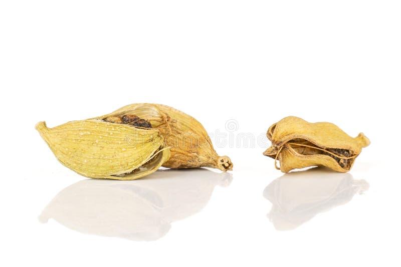 Истинный стручок кардамона изолированный на белизне стоковое фото