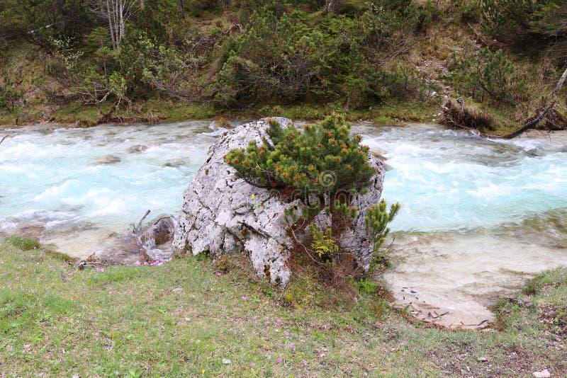 Истоки реки Изара, светя в гениальном свете - голубом цвете стоковое фото rf