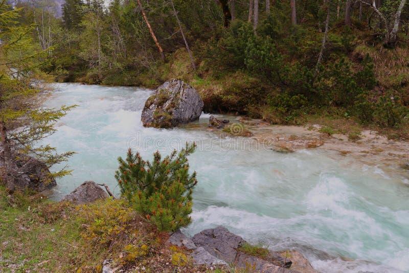 Истоки реки Изара, светя в гениальном свете - голубом цвете стоковые фотографии rf