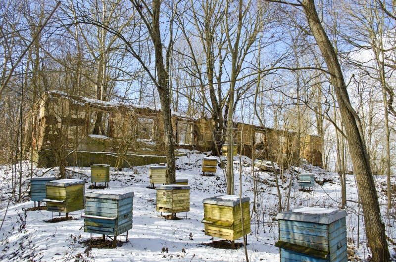 Исторические руины имущества поместья и старая группа улья в зиме стоковое изображение rf