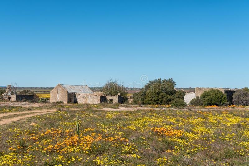 Исторические руины между wildflowers на Groenrivier около Nieuwoudtville стоковое фото