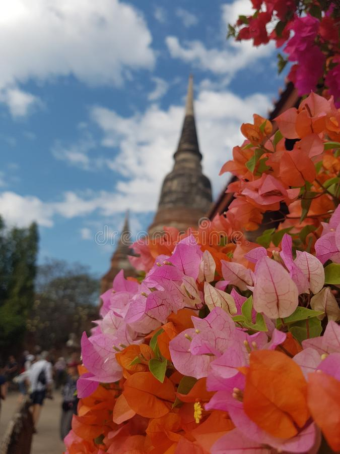 Исторический город Ayutthaya, Таиланда Wat Mahathat, Wat Phra Sri Sanphet, Wat Chaiwatthanaram, Ram Wat Phra стоковое изображение rf