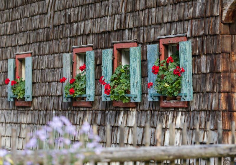 Историческое окно сельского дома с красными гераниумами стоковое изображение rf