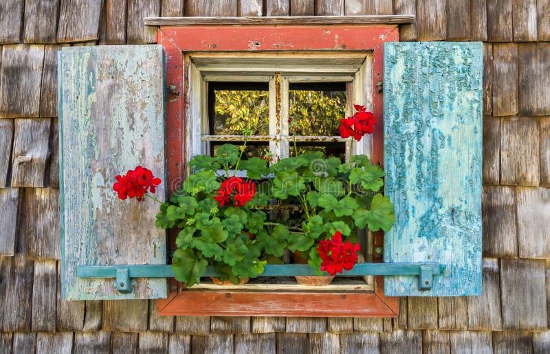 Историческое окно сельского дома с красными гераниумами стоковое фото rf