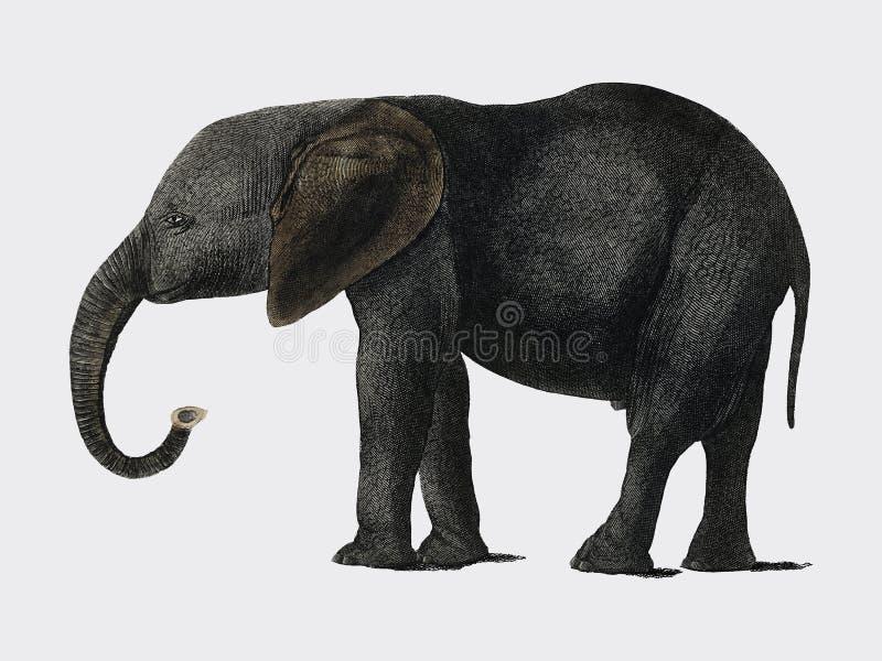 История земли и оживленной природы 1848 кузнцем Оливера 1728-1774, портрет темного серого слона цифрово бесплатная иллюстрация