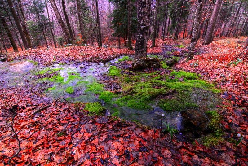 Источник в лесе стоковое изображение rf