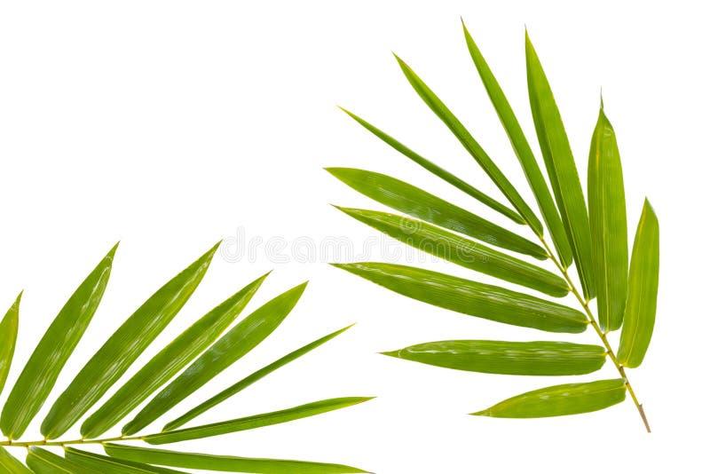 листья изолированные бамбуком стоковые изображения