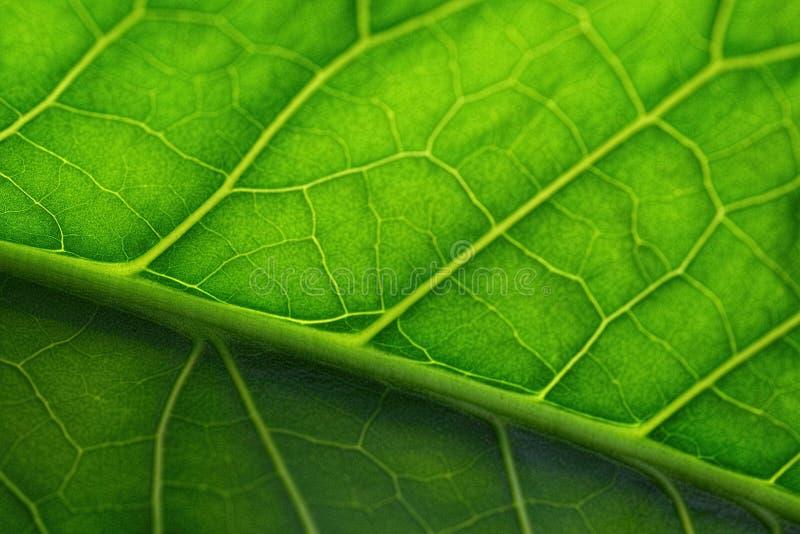 листья крупного плана зеленые стоковое фото rf
