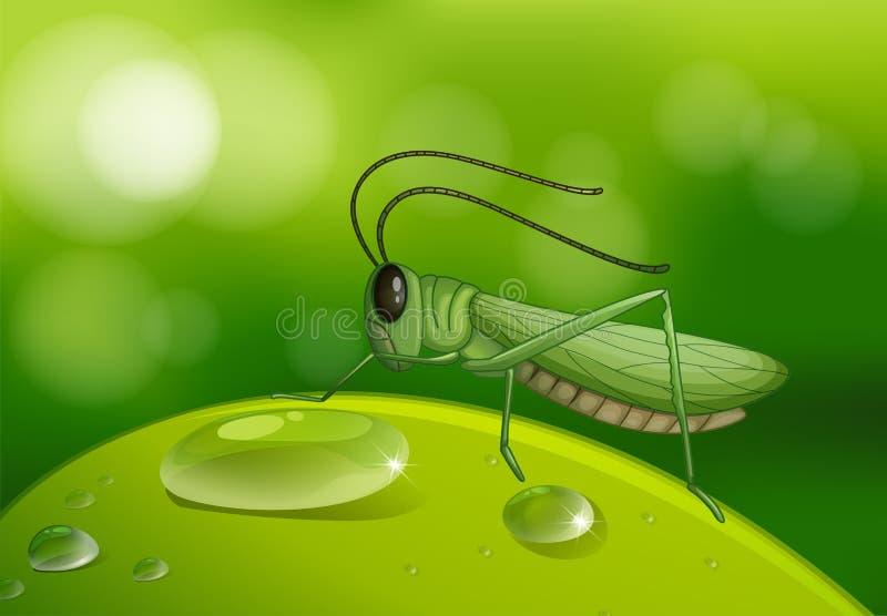 листья кузнечика зеленые иллюстрация вектора