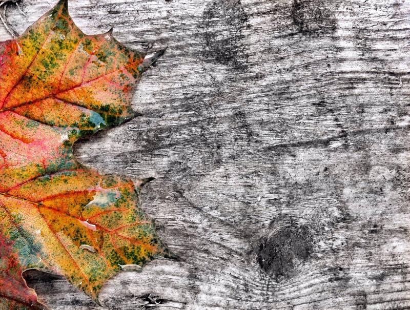 листья осени влажные стоковое изображение rf