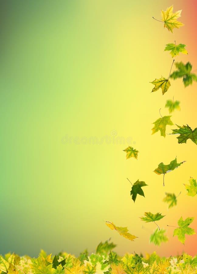 листья осени падая иллюстрация штока