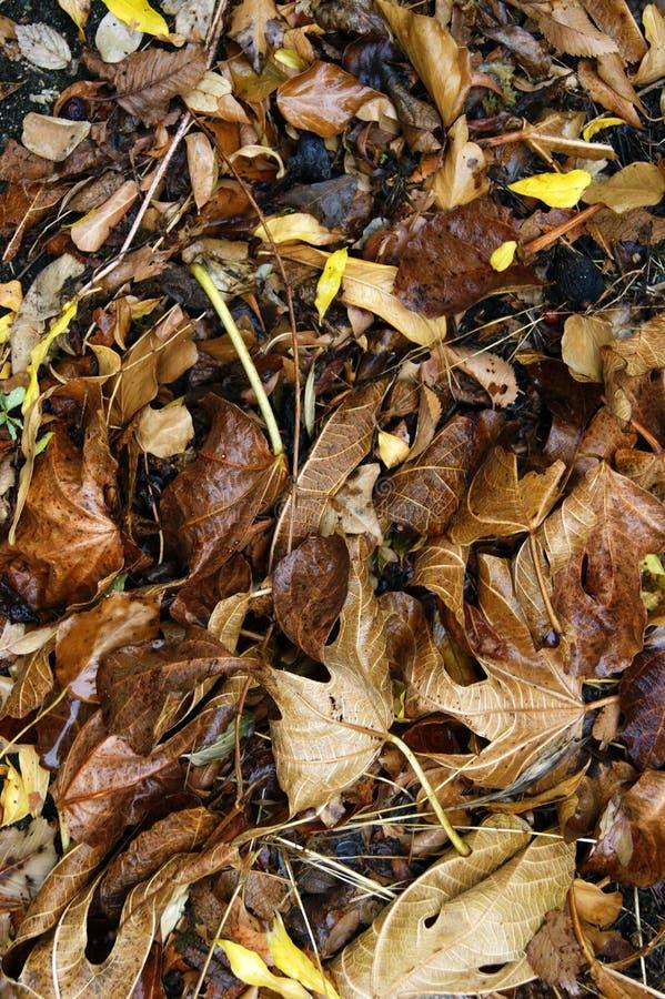 листья осени упаденные предпосылкой стоковая фотография