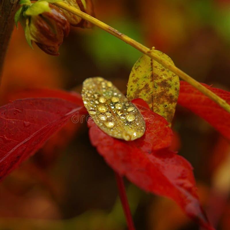 листья падений vector вода стоковые изображения