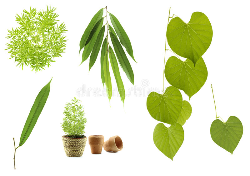 листья собрания зеленые стоковое изображение rf