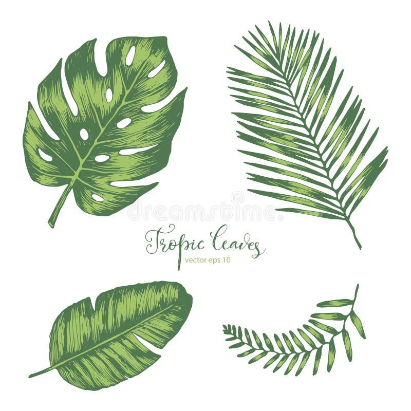 листья установили тропической