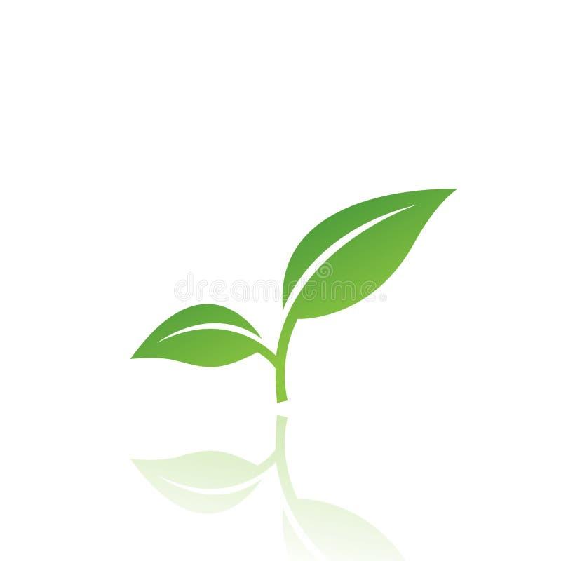 листья 4 иллюстрация вектора