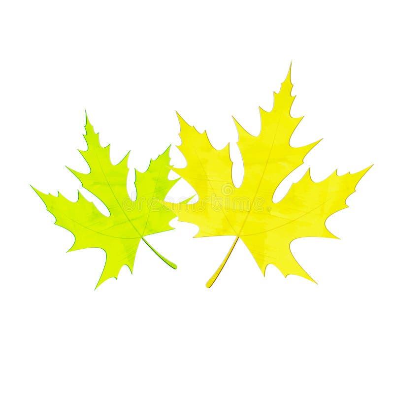 листья 2 иллюстрация штока
