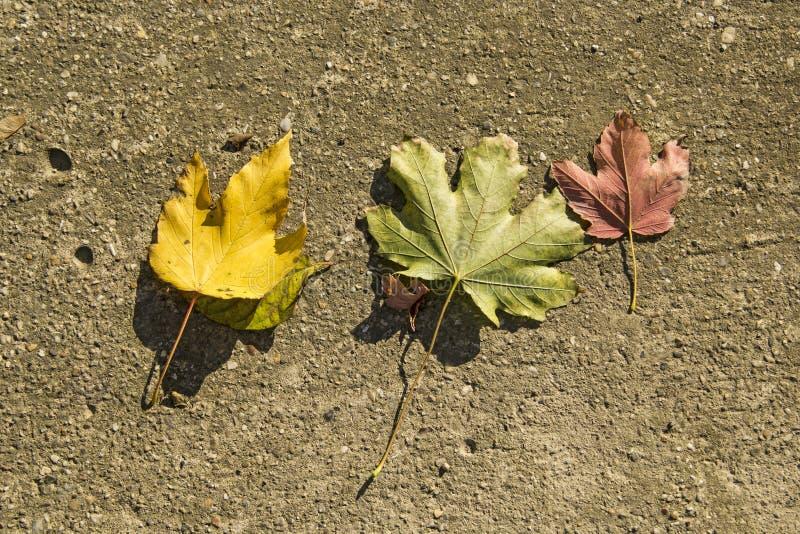 листья 3 стоковая фотография rf