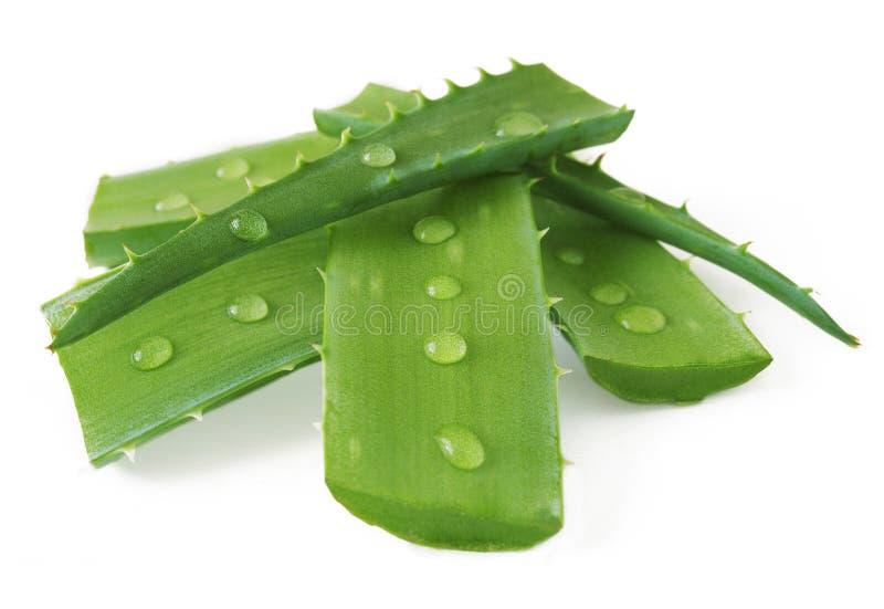 листья vera алоэ свежие стоковые фото