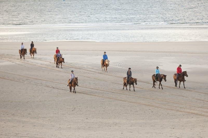 Исландские лошади на северном пляже seav голландского vlieland острова стоковая фотография