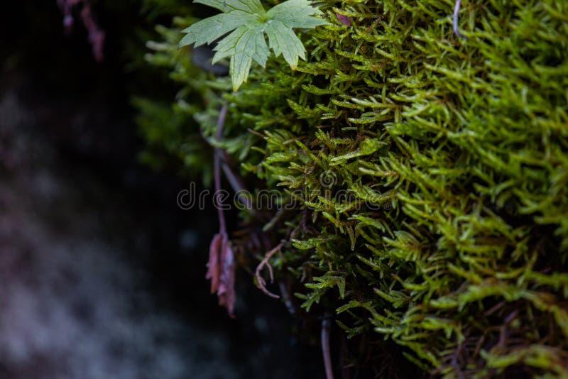 Исландский мох пещеры стоковые фото