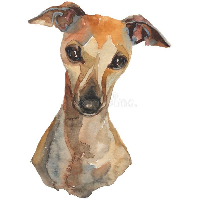Итальянская борзая, рука акварели покрасила портрет собаки бесплатная иллюстрация