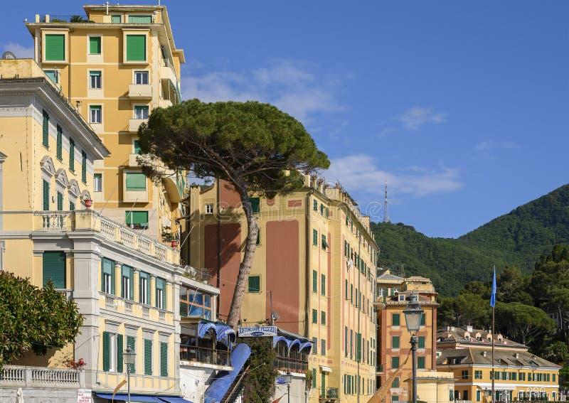 Итальянский ринв каменной сосны растя терраса ресторана в Camoglia, Италии стоковое изображение