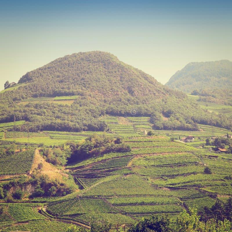 Download Итальянка альп стоковое фото. изображение насчитывающей поле - 41658968