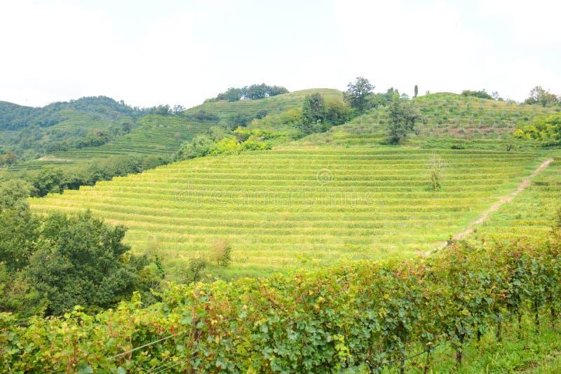 Итальянский виноградник горы стоковое изображение rf