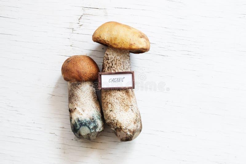 Идея натуральных продуктов, концепция, грибы на белой таблице стоковые изображения