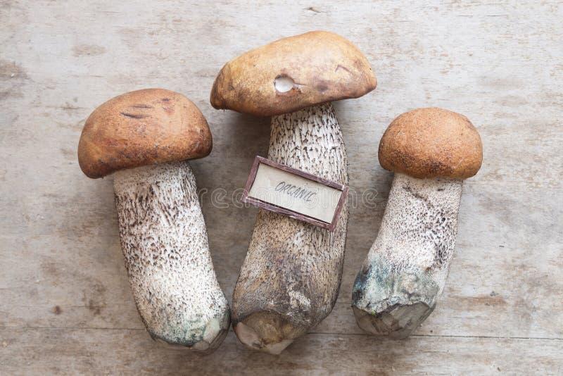 Идея натуральных продуктов, одичалые грибы на таблице стоковое изображение rf