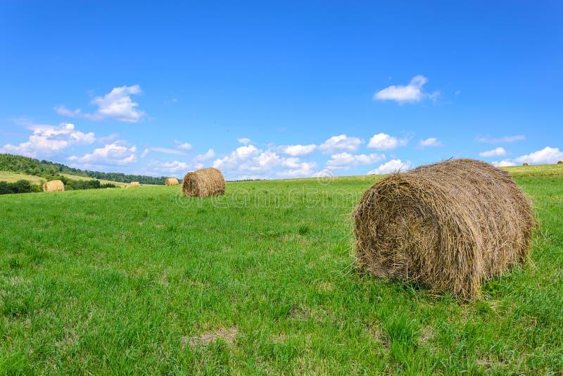 Идилличное поле фермы стоковая фотография