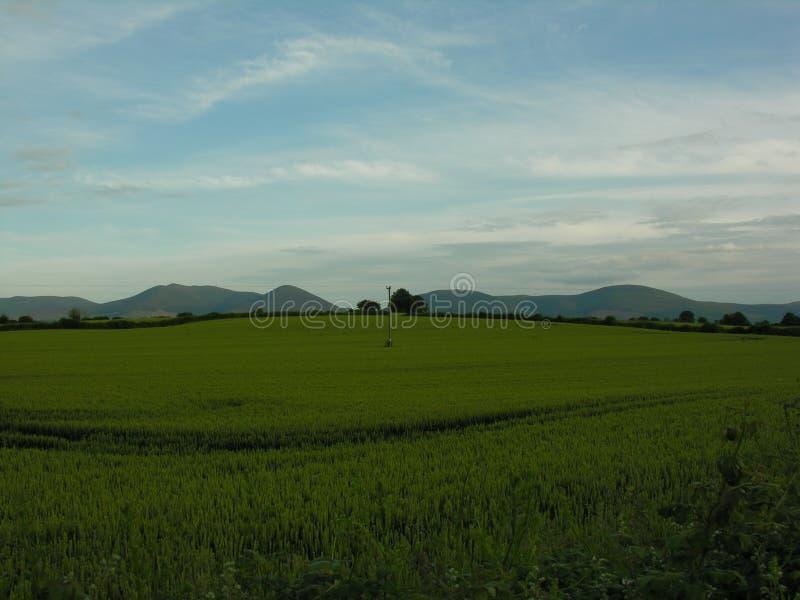 Идилличное сельскохозяйственное угодье стоковое фото