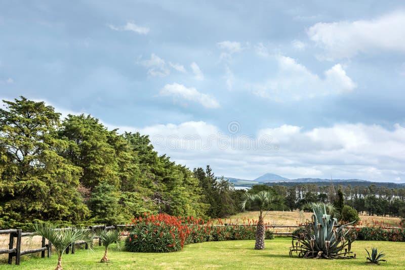 Идилличные окрестности озера верб, Уругвая стоковое изображение rf