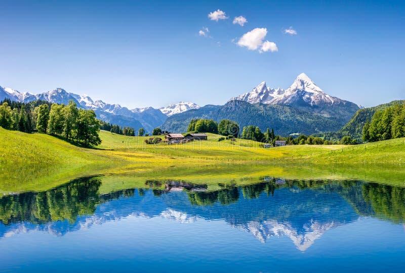 Идилличный ландшафт лета с ясным озером горы в Альпах стоковая фотография rf
