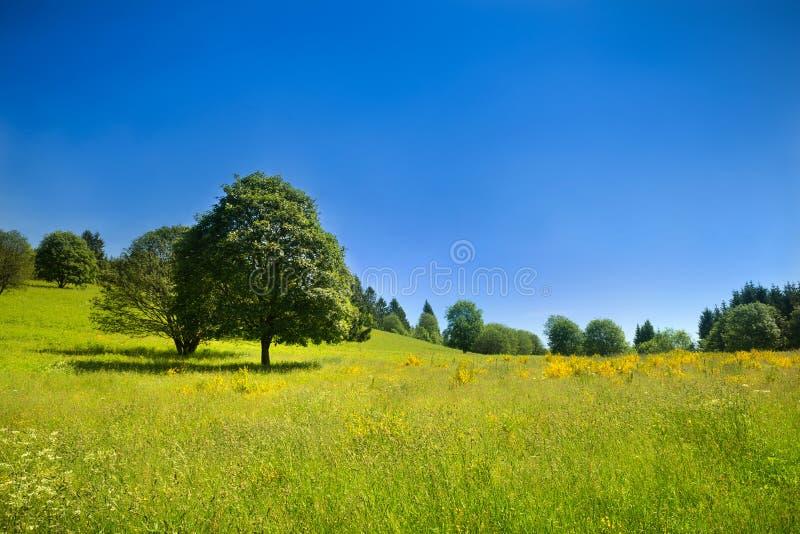 Идилличный сельский пейзаж с зеленым лужком и глубоким голубым небом стоковое изображение rf