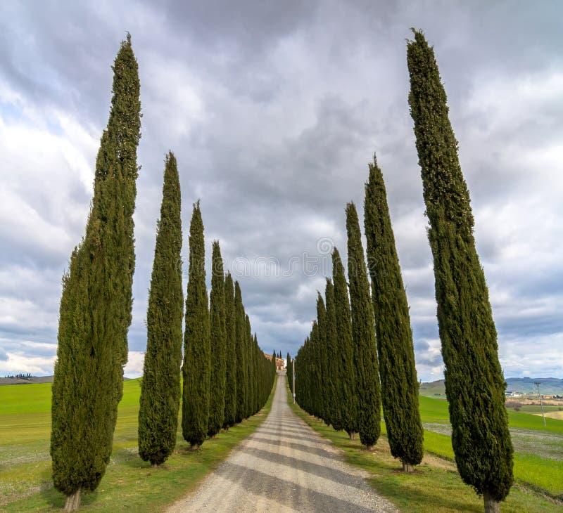 Идилличный тосканский ландшафт с переулком кипариса около Pienza, d'Orcia Val, Италии стоковое изображение rf