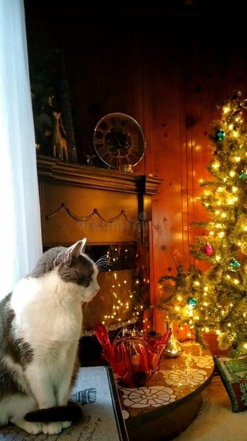 И киска ждать рождество! стоковое фото rf