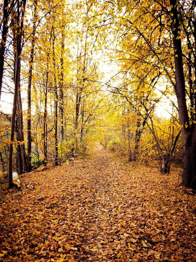 И листья пришли рушащся вниз стоковые изображения