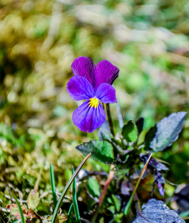 лилово стоковое изображение