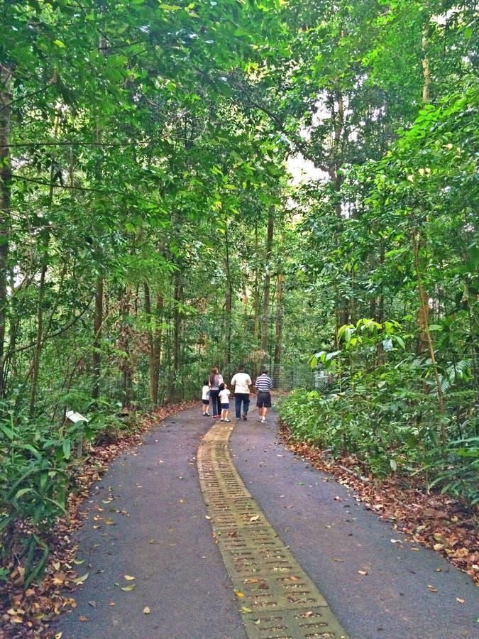 Идти в запас леса стоковые изображения rf