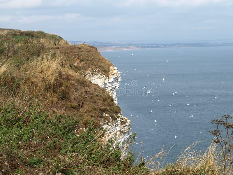 Идти вдоль прибрежного пути от скал bempton к filey стоковые фотографии rf