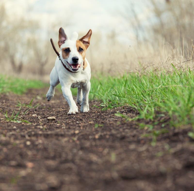 Идущая собака на лете стоковые фото