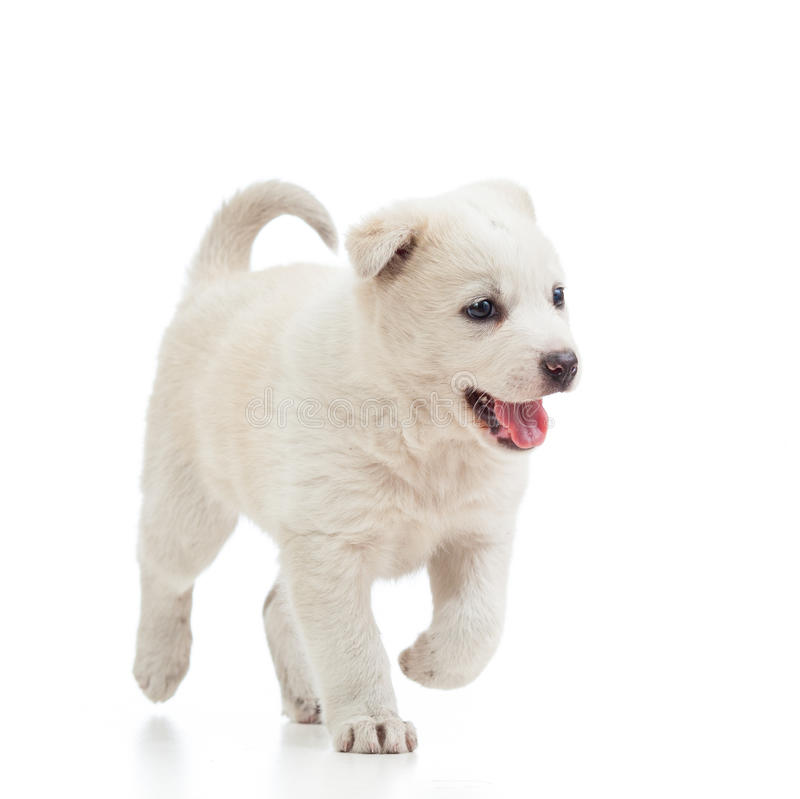 Идущая собака щенка стоковое изображение rf