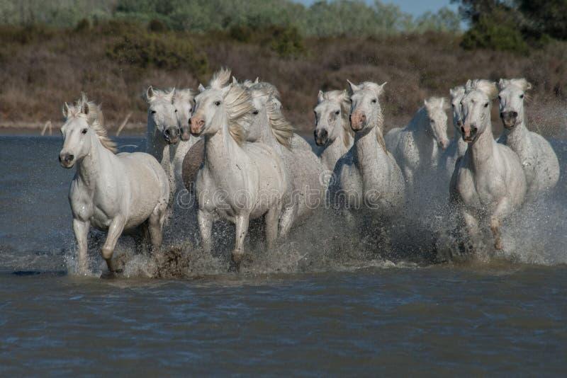 Идущие лошади стоковые фото