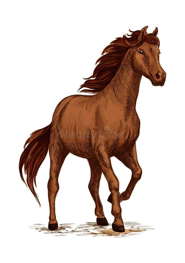 Идущий эскиз лошади с коричневым аравийским жеребцом бесплатная иллюстрация
