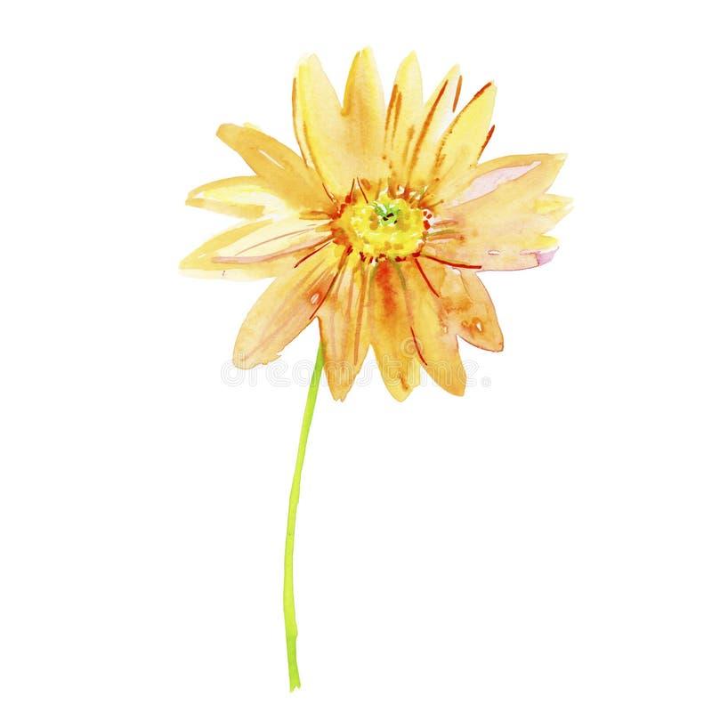 Иллюстрация акварели с красивым цветком иллюстрация вектора