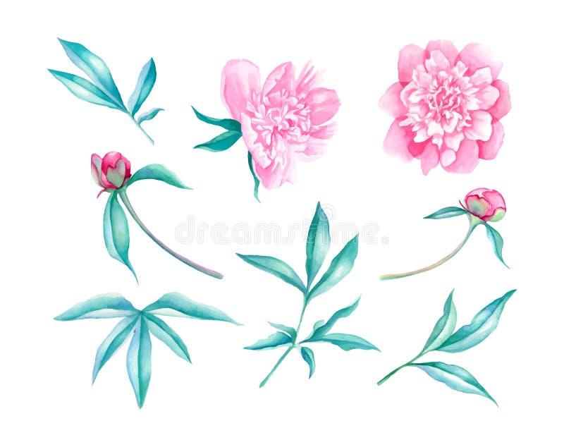 Иллюстрация акварели цветка пионов иллюстрация штока